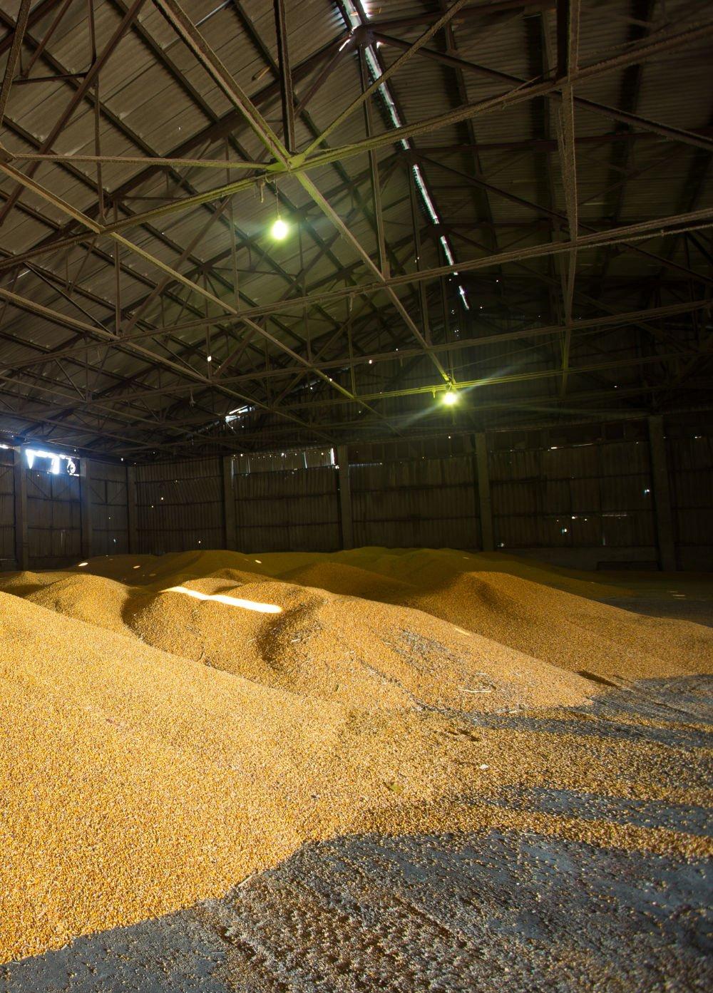 Grain store vertical